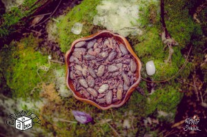 Ceremonial Cacao Beans *Organic & Unhybridized*