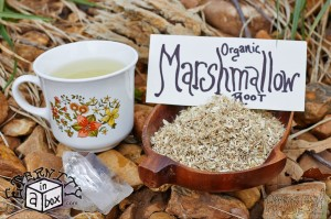 Marshmallow Root *Organic*