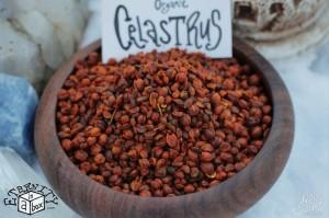 Celastrus Paniculatus Seeds 'Intellect Tree' *Organic*