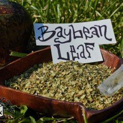 BAYBEAN Leaf Foliage Canavalia Rosea Maritima *Organic*