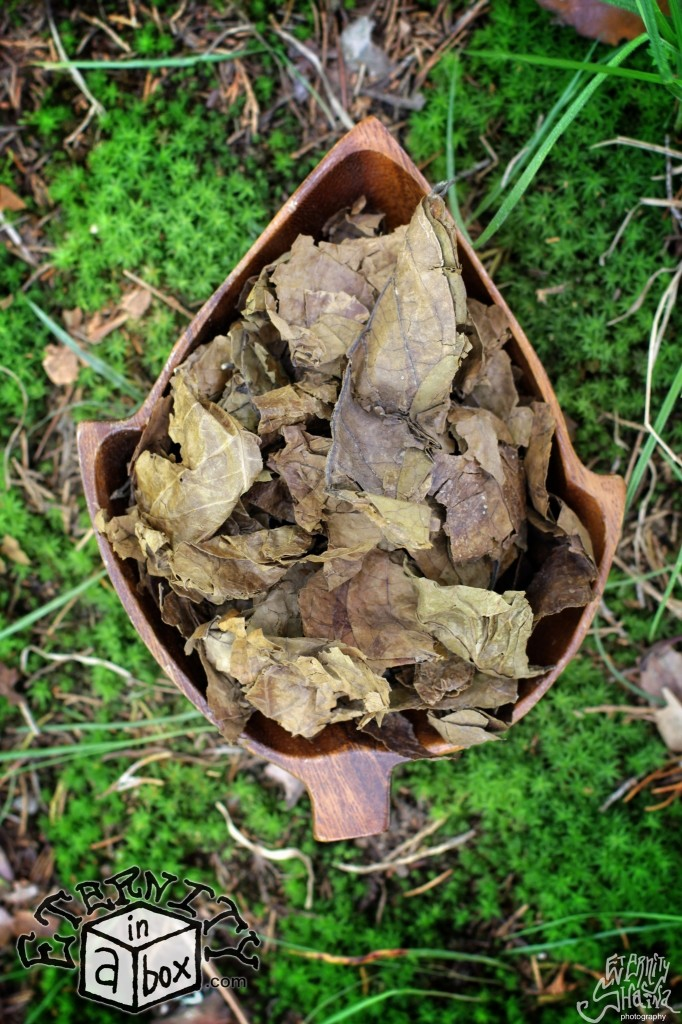 Yellow Banisteriopsis Caapi Leaf Foliage AYAHUASCA