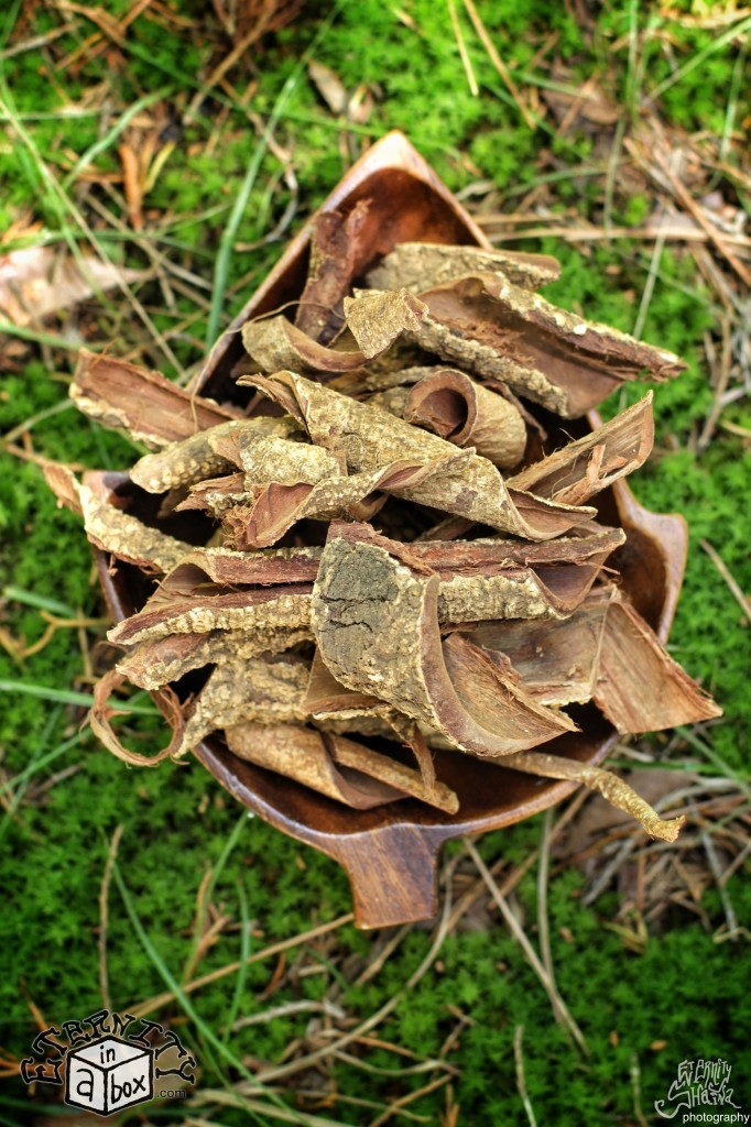 Hawaiian Acacia Confusa Root Bark - Large Pieces *Organic, Wild Harvested!*