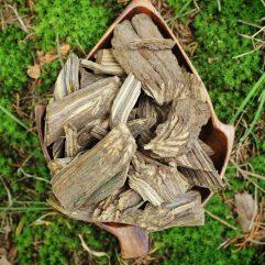 BLACK Banisteriopsis Caapi Ayahuasca Whole Vine