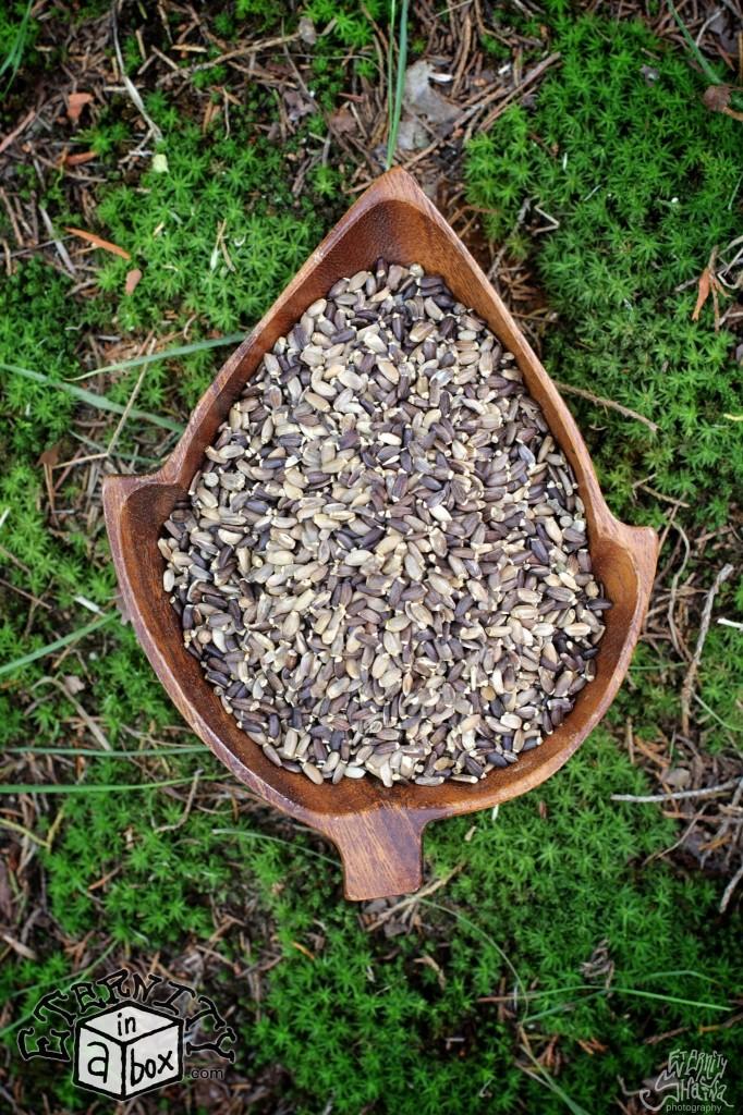 Milk Thistle Seeds *Organic*